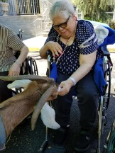 Pet Therapy (10)